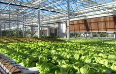 Lufa Farms: worlds first rooftop greenhouse (Montreal). Link to video clip.
