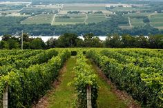 Finger Lakes Region: Where Riesling Rules