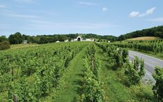 Millbrook, NY is home to rolling hills, a quaint downtown, an award-winning winery, and a vibrant equestrian scene. Photo by Dutchess Tourism.