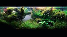 How can you have an aquascape like this? Click the link on our main page!  Leroy Michael