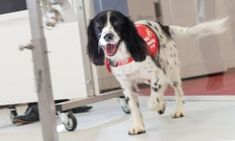 Dogs can detect malaria by sniffing people's socks   World news   The Guardian