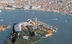 Grullas volando sobre Venecia