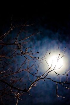 moon light ... breath-taking photo