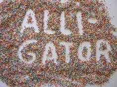 ALLIGATOR P1220286