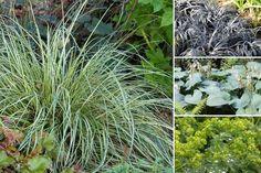 10 plantes vivaces d'ombre pour composer un massif - Promesse de Fleurs Geranium Vivace, Carex, Herbs, Plants, Ps, Menu, Garden, Shade Garden Plants, Beautiful Gardens
