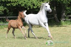 ARABIAN MARE AND FOAL #arabianhorses Arabian Horses, Animals, Animales, Animaux, Animal, Animais