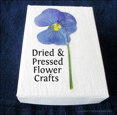 These easy DIY pressed flower crafts are perfect gifts or ways to liven up your own decor and containers. Two methods for pressing flowers are included along with the craft tutorials. Flower Frame, Flower Boxes, Flower Cards, Flower Diy, Homemade Crafts, Diy And Crafts, Crafts For Kids, Floating Flowers, Pressed Flower Art