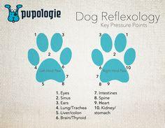 Image result for dog reflexology chart