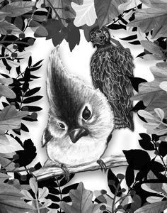 Concierto de aves