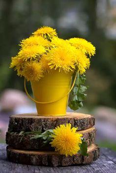 The gold of dandelion flowers. Yellow Flowers, Wild Flowers, Beautiful Flowers, Beautiful Pictures, Summer Flowers, Dandelion Yellow, Best Edibles, Morning Flowers, Edible Flowers