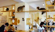 katt cafe