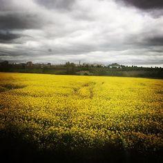 Amarillo y gris... paisajes de #Navarra (By @juliadroid - #Instagram)
