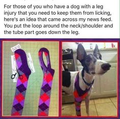 Products: Must Have Stuff For Dog Lovers ♥ Dog Care Tips ♥ Pet sleeve to protect your doggies leg.♥ Dog Care Tips ♥ Pet sleeve to protect your doggies leg. Dog Care Tips, Pet Care, Pet Tips, Baby Care, Diy Pour Chien, Animals And Pets, Cute Animals, Gato Gif, Dog Anxiety