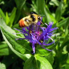 Little Flower or Big Bee?