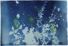 Christine Nguyen. Cyanotype , watercolour and salt crystals