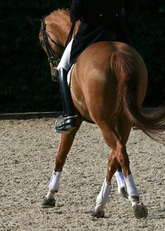 Breeders, owners, trainers and agents of exceptional sport horses for Grand Prix dressage & show jumping. All The Pretty Horses, Beautiful Horses, Animals Beautiful, All About Horses, Dressage Horses, English Riding, Jolie Photo, Horse Pictures, Horse Photography