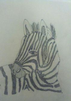 Zebra lapis