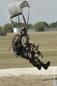 Cpa 10 - an operational chuteur with his MWD in landing phase. Army Dogs, Police Dogs, Military Working Dogs, Military Dogs, Dog Soldiers, Belgian Malinois, Search And Rescue, Mundo Animal, German Shepherd Dogs