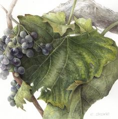 http://www.paintbotanical.com/paintings/paintings.html