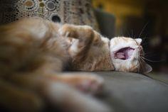 Yawning Cat hd wallpaper by iLoveCats Camera Wallpaper, Cat Wallpaper, Photography Reviews, Photography Equipment, Nikon Df, Best Dslr, Cat Run, Great Thinkers, Buddy The Elf