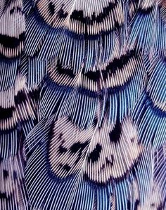 Delicately Intricate Feathers