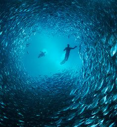 This is an absolutely amazing underwater photo.  I like all the shades of blue