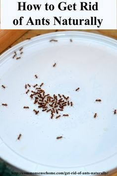How to Get Rid of Ants Naturally - 3 Ways to Control Ants Without Poisons, Inside and Outside - PLUS - reasons why your home may be getting invaded by bugs.