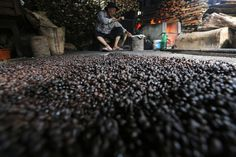 Indonesia's Coffee Exports Projected to Reach $1.4b in 2016 | Jakarta Globe