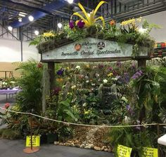 Opening display at the TQOC Conference in Townsville, 2017, consists of running water fall orchids, foliage & palms.