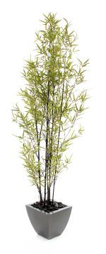 """View large Artificial 6ft 5"""" Black Bamboo Tree - Artificial Silk Plant and Tree Range UK"""