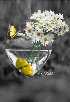 Splash of Color My Flower, White Flowers, Flower Art, Flower Power, Beautiful Flowers, Daisy Flowers, Pretty Photos, Beautiful Pictures, Color Splash