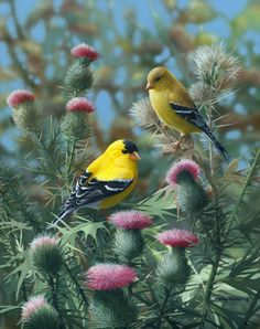 Pink 'N Gold by Bradley Jackson ~ goldfinches & thistles hyper-realistic Kinds Of Birds, All Birds, Little Birds, Love Birds, Pretty Birds, Beautiful Birds, Animals Beautiful, Yellow Finch, Yellow Birds