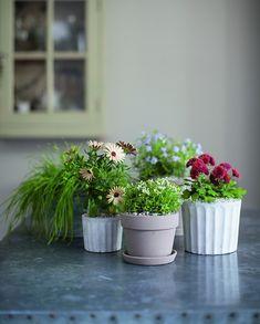 Isabelle Palmer, The House Gardener, Cottage Garden House Plants| Gardenista