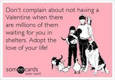 Adopt ♥ Foster ♥ Volunteer ..... Spay ♥ Neuter ♥ Don't Breed ... DONATE <3