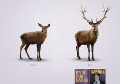 Adeevee - Garage Magazine: Deer, Lion, Duck, Peacock, Chicken, Fish
