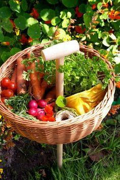 vegetable harvesting basket. <3.
