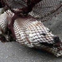 slaughter of stray dogs in Romania is stopped. Petición dirigida a: Presidente de la Comisión Europea José Manuel Durao Barroso  Pedimos que se detenga la masacre de perros callejeros en Rumanía.