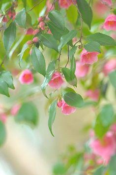 Beautiful Flowers Wallpapers, Beautiful Rose Flowers, Beautiful Nature Wallpaper, Flowers Nature, Amazing Flowers, Pretty Flowers, Beautiful Gardens, Pink Flowers, Flower Background Wallpaper