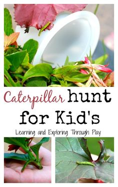 Caterpillar Hunt for Kids. Hands on, outdoor learning activities. By Learning and Exploring Through Play.