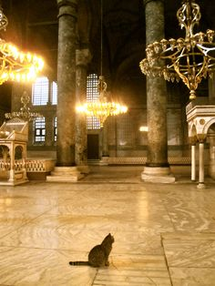 """""""The Cat Visitor"""", watches the historical magnificence in the Saint Sophia (Hagia Sophia) Museum, Istanbul."""