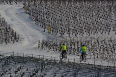 Nothing more beauty than a ride into the champagne vineyard during winter!