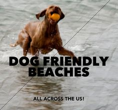 Twelve Dog Friendly Beaches To Help You Celebrate Summer and plan your next pet friendly vacation.
