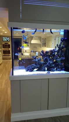 Watch this Awesome Custom Saltwater Aquarium in Home Kitchen. So peaceful and enjoyable. Tank is starting out and growing out beautifully. This Custom Fish tank was designed and installed By Aqua Creations. Awesome Custom Saltwater Aquarium in Home Saltwater Aquarium Fish, Saltwater Tank, Aquarium In Wall, Aqua Aquarium, Aquarium Cabinet, Cichlid Aquarium, Aquarium Stand, Freshwater Aquarium Fish, Aquarium Design