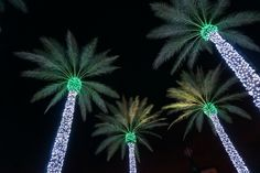 palm tree christmas lights -