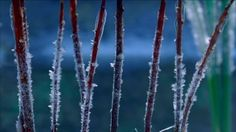 Forming, Frost, Frozen (Icy), Branch, Ice (Nature), Winter, Day, Stock Footage,
