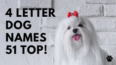 🐶 4 Letter Dog Names 51 SHORT 🐾 TOP 🐾 CUTE 🐾 Ideas | Names Unique Female Dog Names, Best Dog Names, Cute Girl Puppy Names, Cute Names, Best Apartment Dogs, Short Dog, Best Dogs For Families, Group Of Dogs, Best Dog Breeds