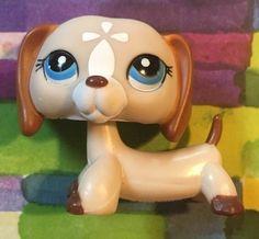 Littlest Pet Shop RARE Dachshund Dog Puppy 1491 Brown Tan Mocha White LPS | eBay