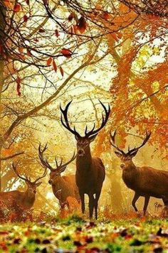 Another stunning stag print