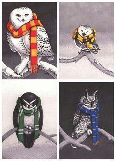 House owls