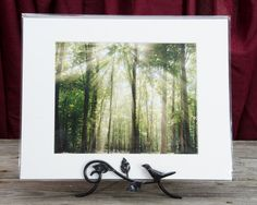 "Ready to Frame 5"" x 7"" Landscape Photograph Sun Rays Through Treetops in a 8"" x 10"" Mat and Backer Board *Stand is not included"